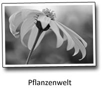 Fotoblog Pflanzenwelt