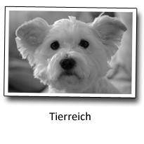 Fotoblog Tierreich